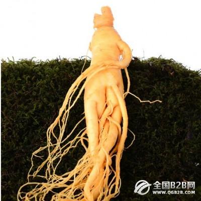 中国长白山特产保 生鲜人参泡酒 基地直销
