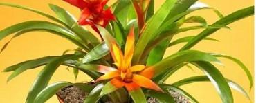 我们平时常见的室内花卉植物品类大全,看看你有哪些
